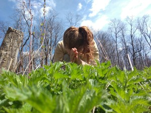 herbal toolkit yoga